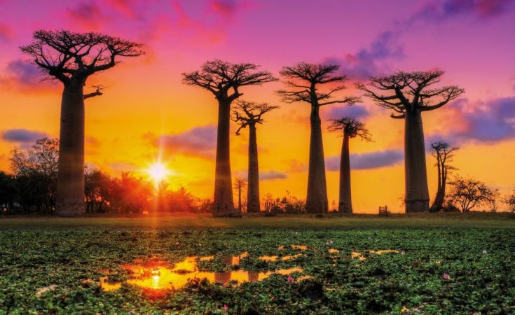 Madagascar - a remote treasure in the heart of Africa