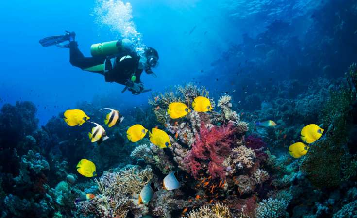 Scuba diving and big game fishing