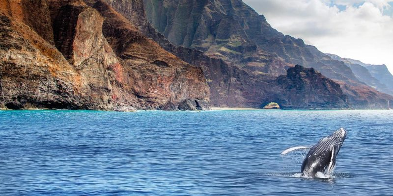 Seeing The Magical Whales Of Kauai, Hawaii