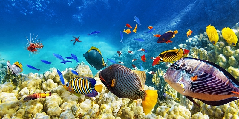 Outer barrier reef fish