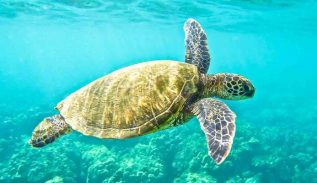 Amazing Sea Turtles of North Cyprus